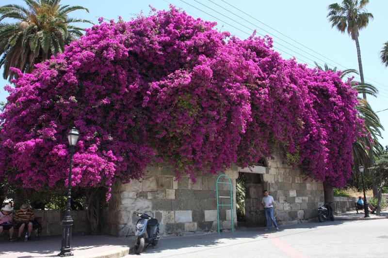 Картинка растений в греции